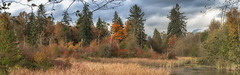 IMGP5767-Pano-Edit.jpg (peter_jdh) Tags: autumn bc landscape nature colours forest water mountains woods canada portcoquitlam fall trees wetlandhabitat