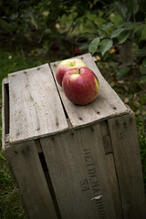 Orchard (DJ Wolfman) Tags: orchard apple crate red green leaf fall fruit michigan sony a7markii