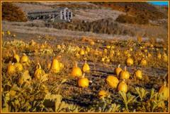 1018. At the farm 5 (Oscardaman) Tags: kolariirchromeforinquiresaboutanyofmyphotos pleaseemailmeatoscarwitzgmailcom 1018 at farm 5