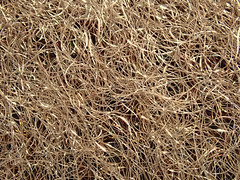 Bronze wool abstract (lenswrangler) Tags: lenswrangler digikam bronze wool abrasive copper macromondays wire abstract