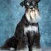 HMKC Pet Photo Day 2019