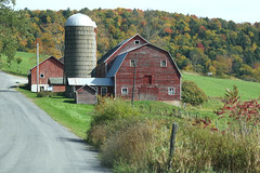Close To The Road (Diane Marshman) Tags: farm barn red weathered wood siding windows cinderblock foundation metal roof silo buildings rural fence post fencepost grass field weeds autumn fall foliage scene road country ny newyork state outdoors sumac yellow orange green colors mountain