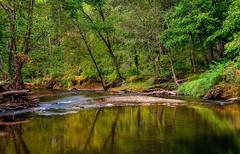 Calm (NKidambi) Tags: landscape trees trail fall green water river creek forest cascade seneca ridge sunset reflection