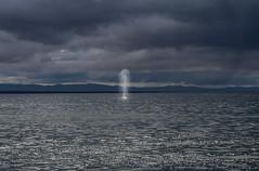 Thar' she blows (rlt64) Tags: whales wildlife