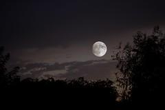Éclaire-moi (Muse poétique) Tags: moon lune 13octobre2019 pleinelune