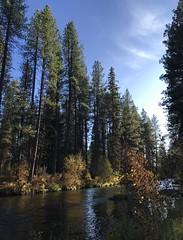 Along the Metolius River (J K Amero) Tags: pnw oregon centraloregon river autumn trees