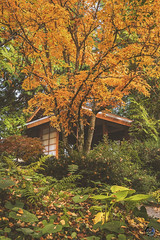 Tea House 2019 (TheArtOfPhotographyByLouisRuth) Tags: japan japanese trees autumn nature season landscape nikond810 teahouse tranquility light peaceful artofimages beautiful pretty nikonflickraward bestworldphotography aggroup prophoto