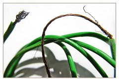 green wire :) (green_lover (your COMMENTS are welcome!)) Tags: macro green wire macromondays frame whitebackground