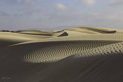 Sand Dune Swoop (Lisa Roeder) Tags: oceanodunes nanpa nanpapix