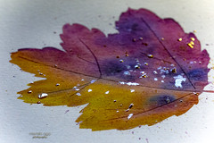 autumn colors 🍂 (mariola aga) Tags: watercolor painting leaf autumn mypainting waterdrops art