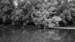 Spectre (Tom Levold (www.levold.de/photosphere)) Tags: fuji auschwitz trees bw water river landscape wasser sw fluss landschaft bäume xpro2 xf18135mm