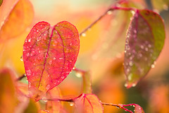 The red heart of Autumn (tonguedevil) Tags: outdoor outside countryside autumn nature woodland trees leaves rain raindrops red colour light shadows