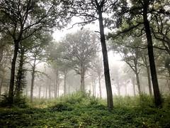 L'appel de la forêt (G.Billon) Tags: nature forest foret rambouillet cameraphone iphoneography gbillon