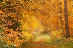 Colourful Clumber Ride (Julian Barker) Tags: clumber park nottinghamshire england uk east midlands autumn fall colour color ride woodland trees orange brown seasons seasonal julian barker canon dslr