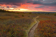 Dolly Sods Twilight Trail (Bold Frontiers) Tags: dollysods twilight trail path passage scene scenic scenery landscape nature natural sunset sundown goldenhour sky clouds cloudy trees foliage leaves organic environment background park westvirginia usa unitedstates america travel wanderlust tourism outdoor outside exterior beauty beautiful bright glow yellow orange red pink blue green color colorful vibrant fall autumn season