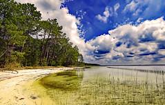 Aux pins et à l'eau (Ciceruacchio) Tags: lac lake lago pin pine pino eau water acqua sable sand sabbia hourtin médoc aquitaine aquitania france francia frankreich nikond750
