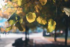 DSC_8428 (197/365) (Marat Mazepin) Tags: nikon z6 nikkorz35mmf18s autumn 365days project365 nature moscow
