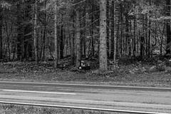Ein Bild das traurig macht. (Günter Hentschel) Tags: traurig rip sw bw unfall schrecklich schiksal schwarzweis deutschland germany germania alemania allemagne europa bayern hentschel flickr nikon nikond5500 d5500 2019