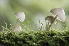 A peak into the small world (www.ownwayphotography.com) Tags: mushroom season fungus moss nature forest wild fresh edible food green boletus organic vegetarian grass fall cap autumn background brown raw natural grow white gourmet healthy closeup orange delicious