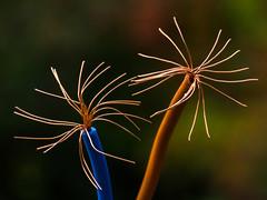 Power flowers - Macro mondays -  HMM (de_frakke) Tags: wire macromondays macromonday hmm