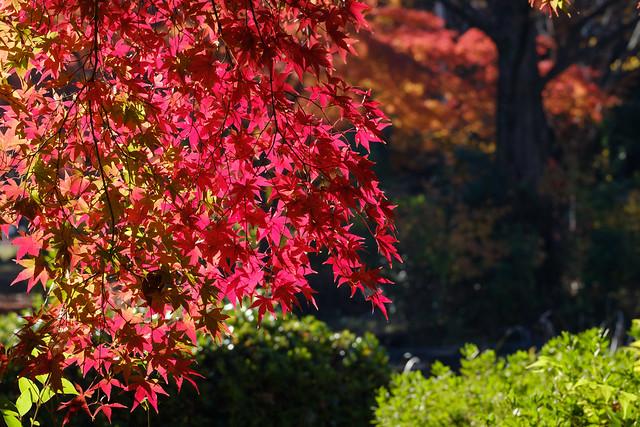 秋の日に 11