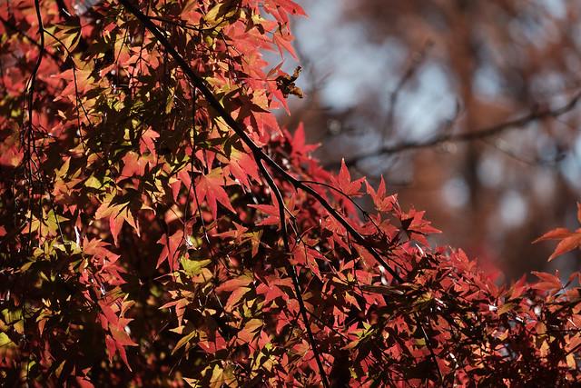 秋の日に 10