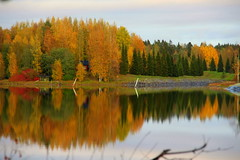 Cloudy fall colors. (irio.jyske) Tags: mirrorimage reflection naturephoto nature naturepictures naturephotograph naturescape naturepic naturephotos naturephotographer naturepics natural landscapes landscapephotos landscapepic lanscape lakescape landscapephotographer landscapepics lake landscapephotograph landscape beautiful beauty nice forest trees colors fallcolors