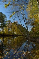 Jesień (Kosmi88) Tags: pond staw nikon głowno autumn october halloween moon nikond poland spooky sky reflection fall październik polska black czarny leaf leves poranek