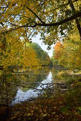 Czarny Staw (Kosmi88) Tags: pond staw nikon głowno autumn october halloween moon nikond poland spooky sky reflection fall październik polska black czarny leaf leves poranek