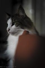 Fang song:There is a ship (miyukiz4 ɥsıןƃuǝ ɹood) Tags: кошка mačka кот en katt köttur კატა un gat katze macska chat katė pisică котенок pisoi kačiukas kotek chaton cica kätzchen mačiatko kettlingur cat kitty