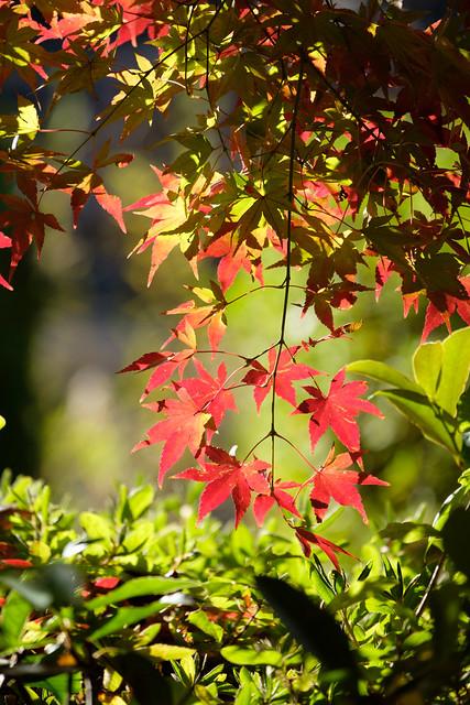 秋の日に 09