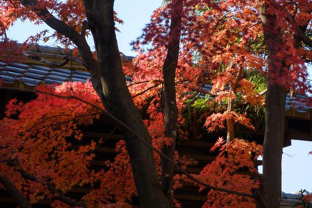 秋の日に 07