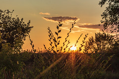 Bush in the sunset (Spurt11) Tags: landscape summer sky sun sunset evening beautiful clouds nature fairytale bush rays