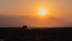 dans le soleil ,pour Nadia et plus .. (Hélène Baudart) Tags: elephant kenya afrique coucherdesoleil