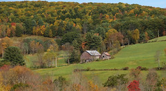 Old Farm In The Fall (Diane Marshman) Tags: farm barn fall foliage autumn colors leaves trees pine yellow orange red green color rural country area scene scenic gray weathered wood siding boards metal roof field grass mountain pa pennsylvania nature