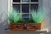 Window Boxes / St Ives