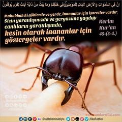 Kur'an 45: 3, 4. (Oku Rabbinin Adiyla) Tags: allah kuran islam ayet ayetler ayetullah hadis hadisler yaratılış evrim bigbang biyoloji zooloji genesis being god religion bible rahman oku bilim dinvebilim muslim evren dünya dua dualar sure