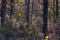 October forest (Dumby) Tags: landscape ilfov românia nature outdoor fall autumn colors forest