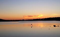 Calm evening (m&em2009) Tags: calm bird evening sunset colour sun cloud water waterscape sky nikon d810 nature albany western australia