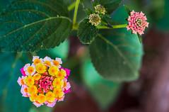 uma flor (elzauer) Tags: sanvitolocapo provinceoftrapani italy