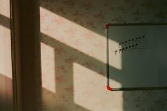 September Lights (alishirazii) Tags: olympus olympusom10 olympusom negative 35mm zuiko50mm zuikolens zuiko zuikolenses filmphotography septemberlight light