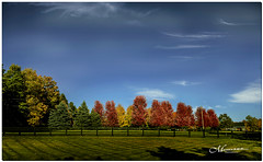 OCTOBER 2019 _308_NGM_3307-1-222 (Nick and Karen Munroe) Tags: caledon northcaledon landscape landscapes fall autumn fallsplendor fallcolours karenick23 karenick karenandnickmunroe karenandnick munroe karenmunroe karen nickandkaren nickandkarenmunroe nick nickmunroe munroenick munroedesigns photography munroephotoghrpahy munroedesignsphotography nature brampton bramptonontario ontario ontariocanada outdoors canada d750 nikond750 nikon nikon2470f28 2470 2470f28 nikon2470 nikonf28 f28 colour colours color colors