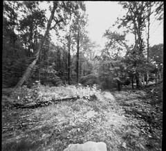 entance to Community Park at Craggy Park, single paver, pathway, trees, Asheville, NC, 6x6 pinhole camera, Ilford FP4+, HC-110 developer, 10.10.19 (steve aimone) Tags: entrance park path pathway paver trees communityparkatcraggypark asheville northcarolina 6x6 6x6pinholecamera pinhole ilfordfp4 hc110developer 120 120film film mediumformat monochrome monochromatic blackandwhite