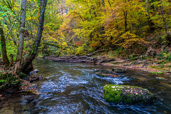 Black river (FVillalpando) Tags: red river forest nature trees autumn water ngysa stones