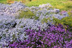 sDSC-8609 (L.Karnas) Tags: donaupark park autumn herbst vienna wien österreich austria 2019 donau danube oktober october