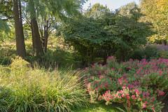 sDSC-8295 (L.Karnas) Tags: donaupark park autumn herbst vienna wien österreich austria 2019 donau danube oktober october