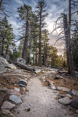Sometimes you just have to create your own path (stevendelacruz.photography) Tags: sunset forest hike sun soa soe backpacker stevendelacruz landscape sony sonya6000