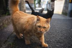猫 (fumi*23) Tags: ilce7rm3 sony sel35f18f emount 35mm a7r3 animal alley street cat chat gato neko bokeh ねこ 猫 ソニー