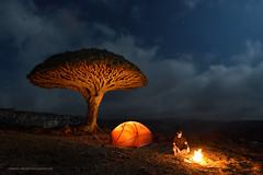 Camp Socotra (Marsel van Oosten) Tags: marselvanoosten squiver yemen socotra camp camping marmot tent campfire night sky moonlight stars adventure exploration exploring hiking trekking wilderness landscape war dragonblood tree