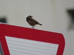 IMG_1785 (jesust793) Tags: pájaros birds naturaleza nature